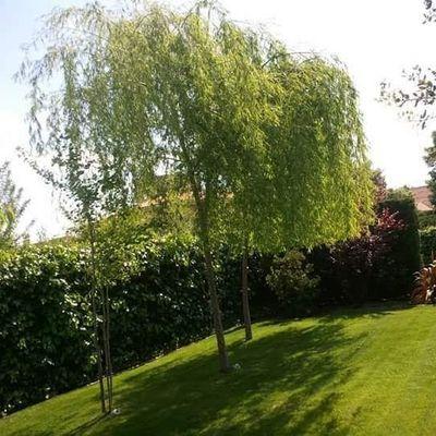 Plantar árboles y plantas