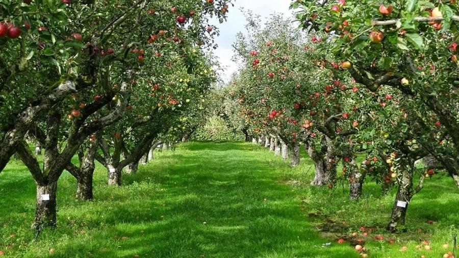 Presupuesto podar o tirar rboles online habitissimo for Arboles frutales para el jardin