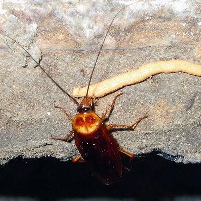 Presupuesto eliminar cucarachas online habitissimo - Por donde salen las cucarachas en el cuarto de bano ...