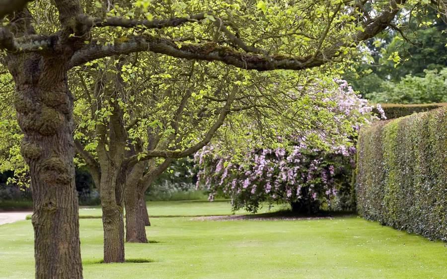Presupuesto plantar rboles online habitissimo for Ejemplos de arboles de hoja perenne