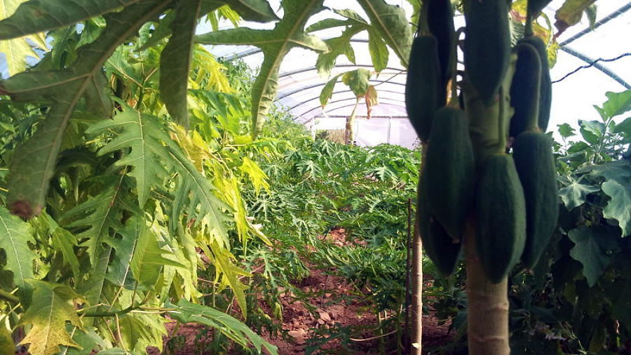Control de plagas en agricultura