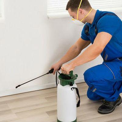 Control plagas en el hogar