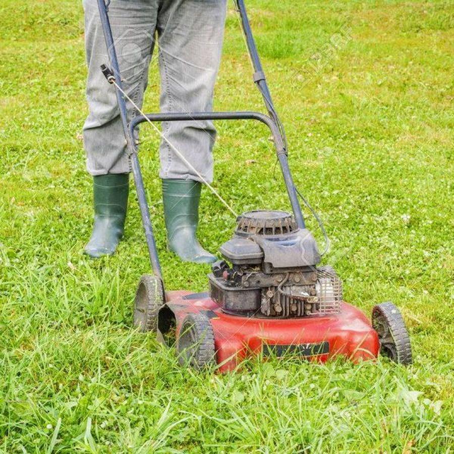 Consejos antes de contactar un jardinero