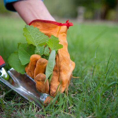 Presupuesto desbrozar jard n online habitissimo for Como quitar la mala hierba del jardin