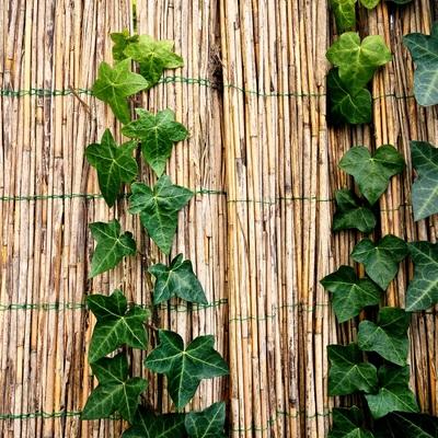 Vallas de brezo o bambú