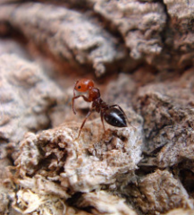 Genial como eliminar hormigas en la cocina fotos como - Eliminar hormigas cocina ...