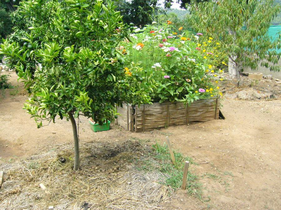 Presupuesto construir jardin online habitissimo - Disenar jardin online ...