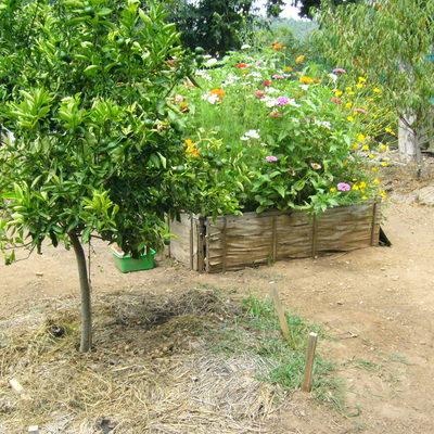 Como hacer un jardin bonito imagen top fabulous como - Como hacer un jardin bonito y barato ...