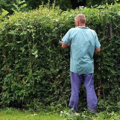 Quitar las malas hierbas manualmente