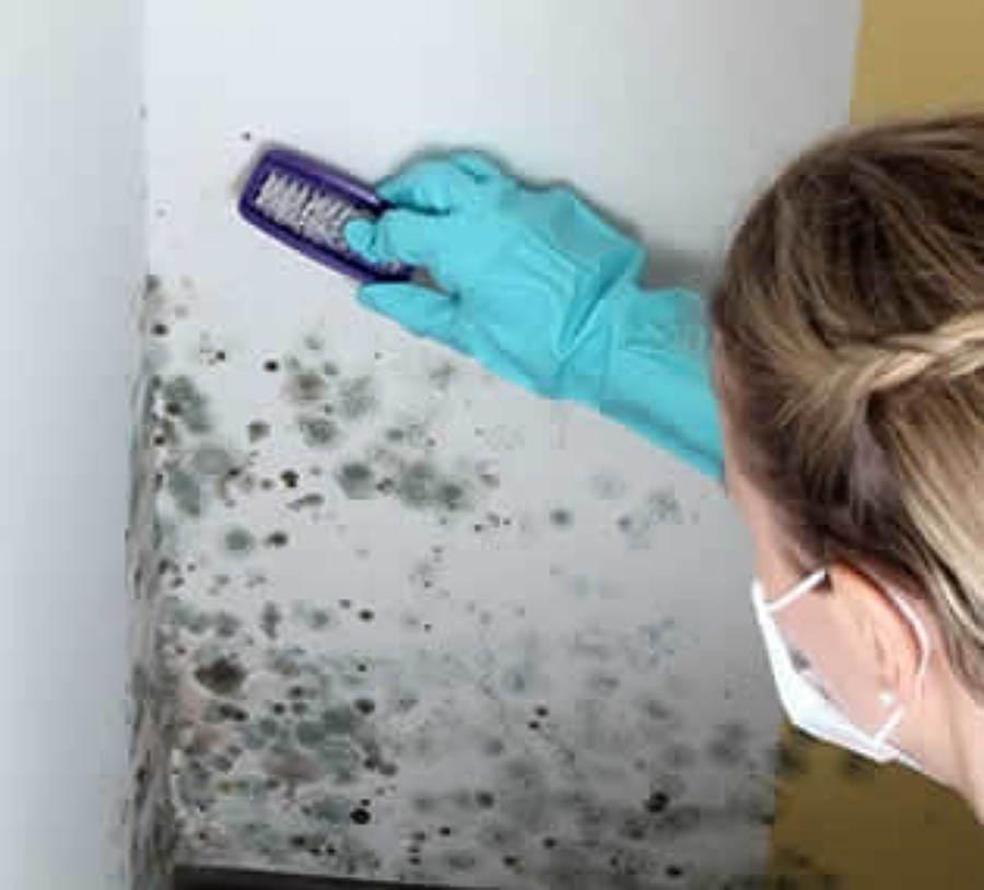 Presupuesto limpieza techos online habitissimo - Como limpiar el moho del bano ...