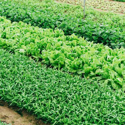 Hacer plantaciones y cultivos