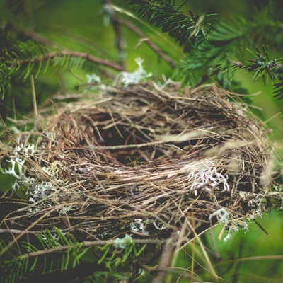 Retirada de nidos