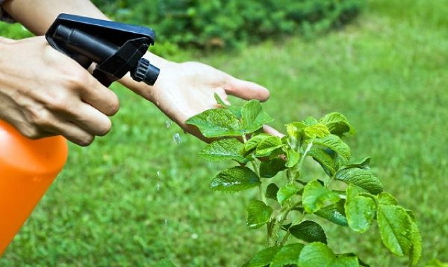 Mantenimiento y control de plagas