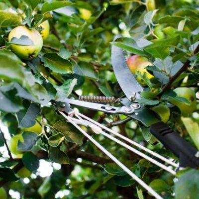 Presupuesto poda rboles frutales online habitissimo for Cuando se podan los arboles frutales