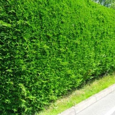 Cercado con árboles o arbustos
