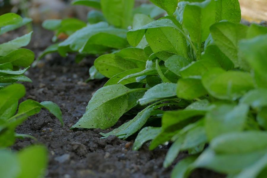 Cultivar un huerto