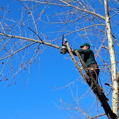 Poda de árboles en altura