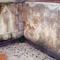 Restauración Edificios, Alicatados, Reformas General