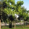 Jardineros, Piscinas, Reforma
