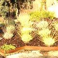 Paisajistas, Técnicos, Diseño Jardines
