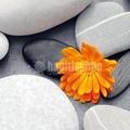 Fotomural Heart Among Stones