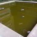 agua verde piscina infantil comunidad