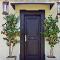 Árboles con Frutas Artificiales - Naranjo