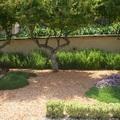 Jardín árido