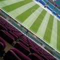 Césped natural - Estadio Faro Portugal