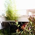 Diseño de jardín en ático. Jardín urbano. Madrid. Aravaca.