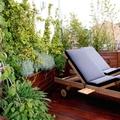 Diseño de jardín en ático. Jardín urbano. Madrid.