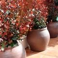 Diseño de jardín en vivienda. Madrid.