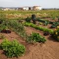 Integración de huertos en jardín - Palma.