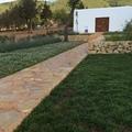 Mantenimiento jardinería Ibiza