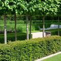 Jardín con setos varios y arboleda
