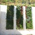 Jardín vertical vivienda La Zagaleta