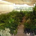 Jardineras para alquiler