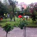 jardineria colegio reina inmaculada