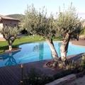 Piscina muy chula con sus oliveras al lado de la piscina.