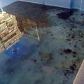 piscina sucia