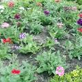 Plantación de flores