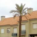 Promocion en Algeciras