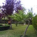 Un jardin con espacio