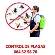 Empresas Control Plagas - American Control