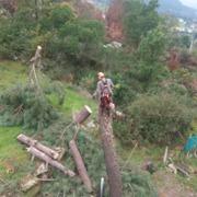 Nortrep arboricultura