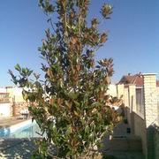 Jardineria Progarden Aranjuez Sl