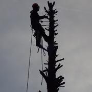 Arboricultura, Poda y Tala Cantabria