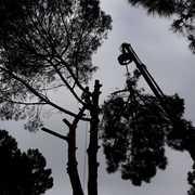 Guillem Soler Arboricultura