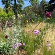 masa de gramíneas y vivaces en jardín privado