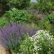 masa de plantación jardín privado